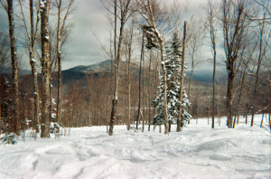 If you're new to glade riding, Bretton Woods offers some opportunities.